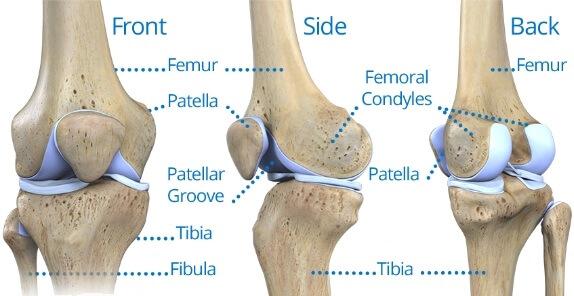 مفصل زانو از نما های مختلف