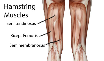 عضلات همسترینگ