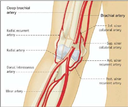 آسیبهای عروقی همزمان با شکستگی یا دررفتگی