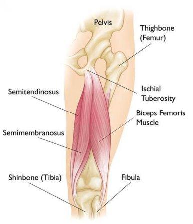تقویت عضلات همسترینگ